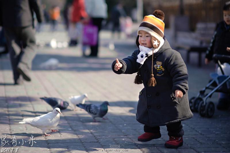 人民广场喂鸽子分割线