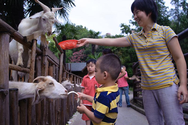 和平公园 动物岛